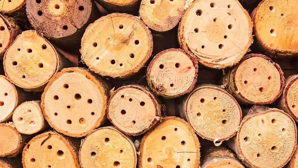 Madeira de Reflorestamento: Vantagens