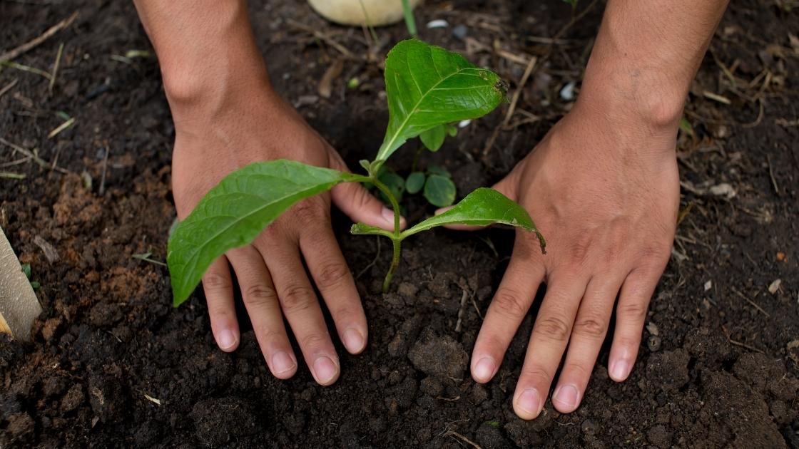 Madeira de Reflorestamento: Tudo que você precisa saber