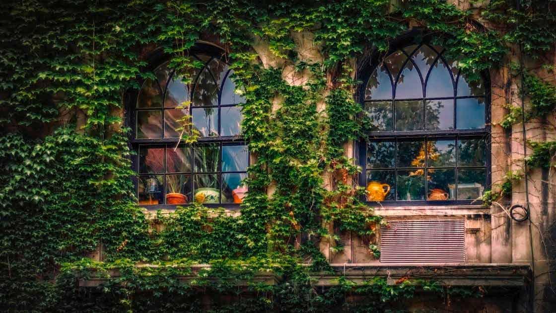 Projeto de paisagismo: Jardim vertical