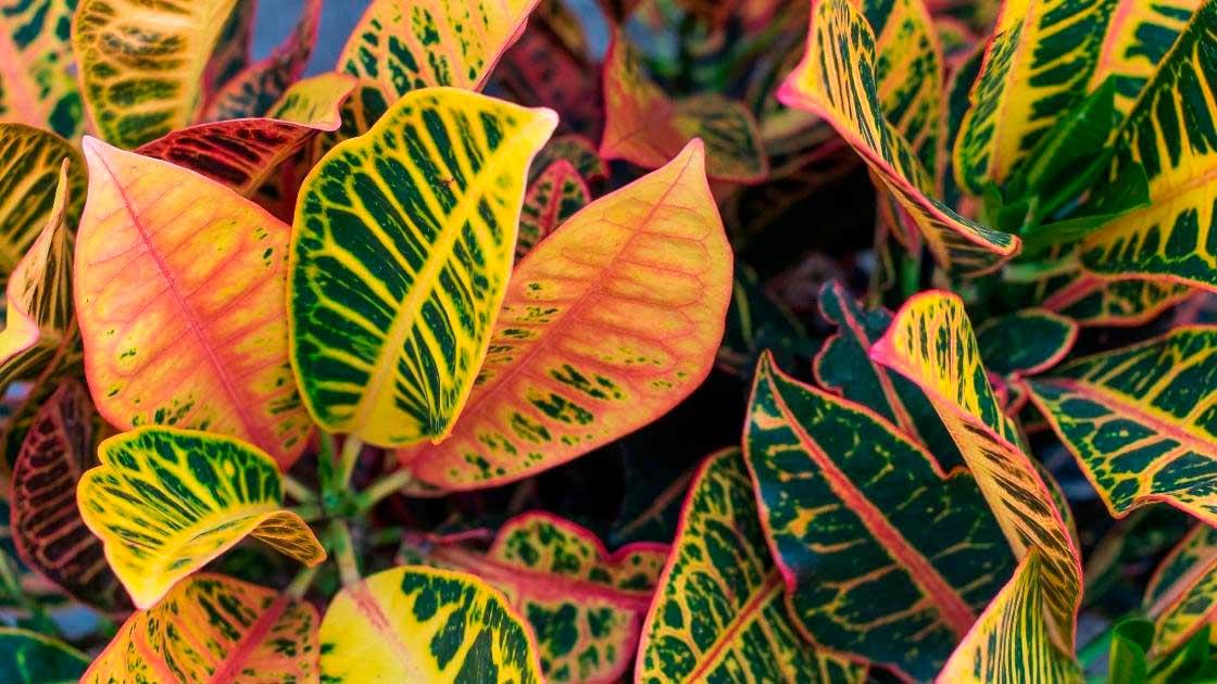 Plantas : 18 espécies de plantas de sombra