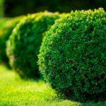Veja as 45 Melhores Plantas para decorar seu Jardim