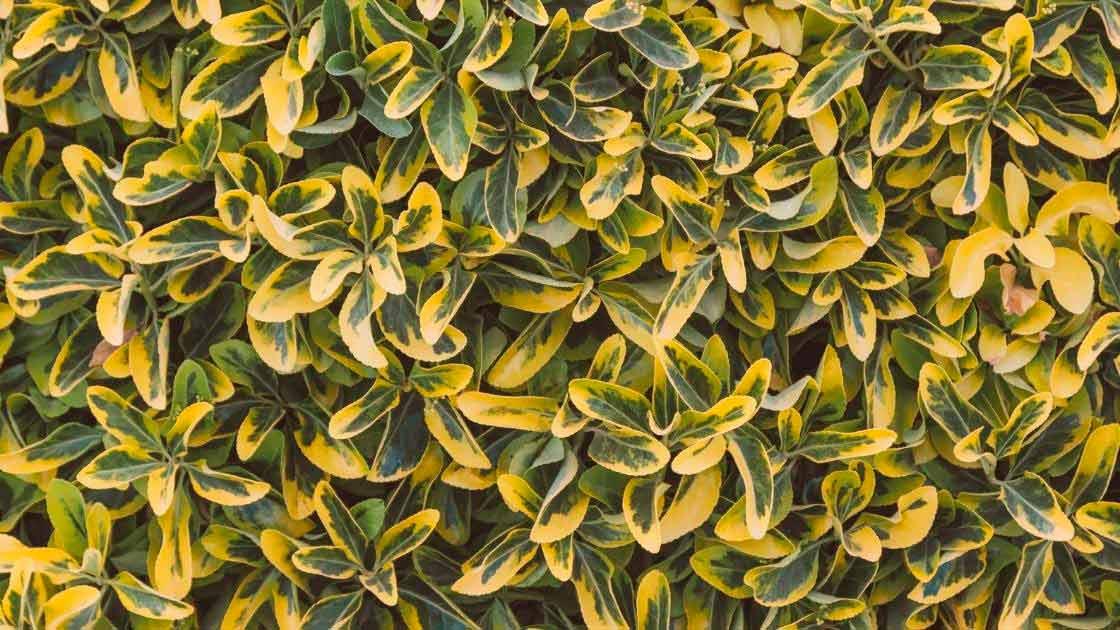 Plantas : 18 espécies de plantas de sol